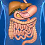Dal cibo alla salute: gli organi chiave dell'alimentazione