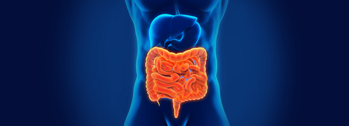 Come il benessere dell'intestino influenza il benessere dell'organismo